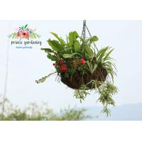 Quality Classic Hanging Basket Flowers Gardening Decorate For Indoor / Outdoor wholesale