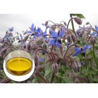 Quality Borage Seed Organic Plant Oils Omega 6 GLA Anti Oxidation For Eczema wholesale