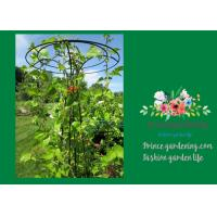 Quality Flower Supports Plant Stakes , Tall Plant Support For Climbing Plants wholesale