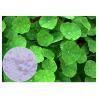 Buy cheap Skin Scars Gotu Kola Leaf Powder , Centella Asiatica Leaf Extract CAS 16830 15 2 from wholesalers