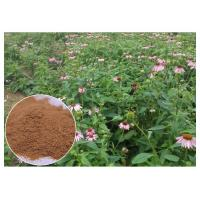 Echinacea Purpurea Plant Extract Powder With Chicory Acid Improving Immune System