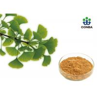 China Pure Ginkgo Biloba Powder With Low Pesticide Residue Chp2015 on sale