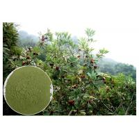 Quality Anti-diabetic anti-oxidation myricetin Bayberry Bark Extract wholesale