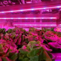 Quality SMD 2835  Led Indoor Garden Lights For Flower / Vegetable , 6-8m Sensor Distance wholesale