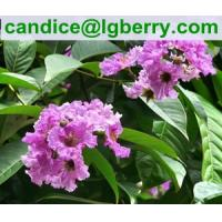 China 100% Natural Banaba Leaf Extract Corosolic acid for nutritional supplement on sale