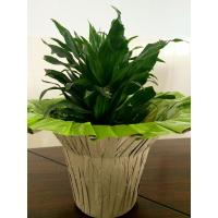 Buy cheap Fastwrap Printed Indoor Flower Pot Covers for Flower or Plant Packaging product