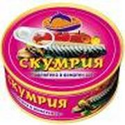 Quality 425g canned Mackerel in vegetable oil/tomato sauce/brine wholesale