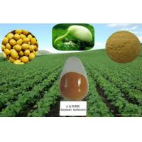 Quality 100% Natural 40-80% Isoflavones Fine Powder Soy Extract --Glycine max (L.) Merri wholesale