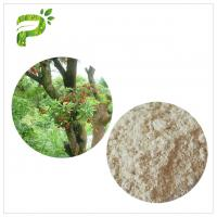 Quality Water Solvent Bayberry Bark Extract Powder , Myricetin Anti Inflammatory Supplements wholesale