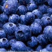 Quality Frozen Blueberry wholesale