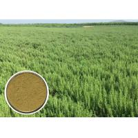 Quality Ursolic acid Natural Cosmetic Ingredients Rosemary Extract Anti - oxidation CAS 77 52 1 wholesale