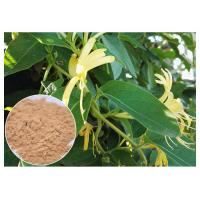 Quality Anti Inflammatory Honeysuckle Flower Extract , 5% Chlorogenic Acid Lonicera Japonica Extract wholesale
