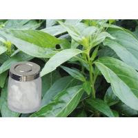 Quality pure natural plant extracts Andrographolide of Andrographis Paniculate Extract wholesale