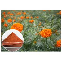Quality Retina Protection Marigold Flower Extract , Lutein 5% Powder Marigold Extract For Eyes wholesale