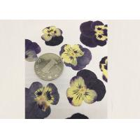 Quality Purple Pansy Real Pressed Flowers True Plant Material For Press Picture Ornaments wholesale