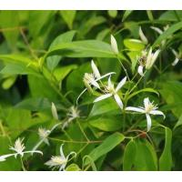 Quality What is Traditional Chinese Medicine wholesale