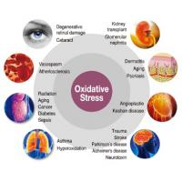 oxidative stress caused diseases to our organs