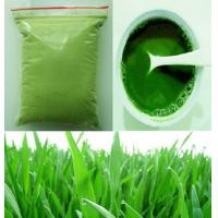 Freshly Made 120mesh Pure Barley Grass Powder for Health Care Supplement