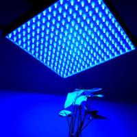 Quality IP44 LED Panel Grow Light For Medical Plants / Greenhouse , High Brightness wholesale