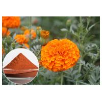 Quality Eye Care Natural Flower Extracts Anti Oxidation Orange Red Powder Lutein From Marigold Flower wholesale