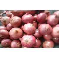 Quality Sweet Red Natural Fresh Onion Bulbs Contains Rich Microelement For Market, The fleshy scales, Light yellow and soft wholesale