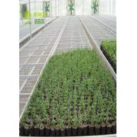 Quality Hydroponic Trays Seedling Greenhouse Grow Beds For Plants Seedbed / Vegetable wholesale