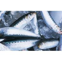 Quality High Quality Whole Frozen Fish Round Sardine For Market With 4-6pcs/kg Size . wholesale