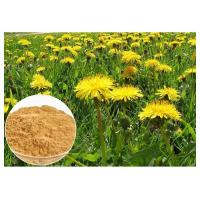 Quality Dandelion Root Herbal Plant Extract Brown Color Powder 80 Mesh For Digestive Aid wholesale