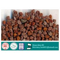 China GMP 100% Natural Common Fenugreek Seed Extract on sale