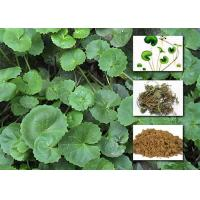Quality Gotu Kola Extract Powder Cosmetic Raw Materials Asiaticoside For Enhancing Immunity wholesale