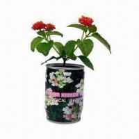 Quality Charismas Gift/Verbena Hybrid Voss/Magic Flower with Growing Medium and Seeds Materials wholesale