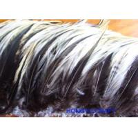 Quality FEATHER ITEMS Product HF082 [Order it!] wholesale