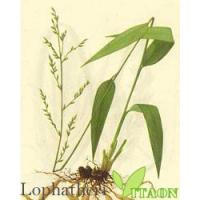 Buy cheap LophaSlim Tea from wholesalers
