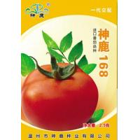 Quality Holy Deer168- Tomato Seed wholesale