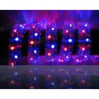 Quality LED Rope/Strip (3 Wire Flat Shape) wholesale