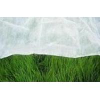 Quality PP spunboded non woven (polypropylene fabrics for Agriculture Plants) wholesale