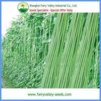 Quality Hybrid Vegetable seeds Chinese Long Hybrid Cowpea Seeds wholesale