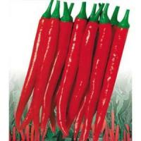Quality Red Hot Sharp Chili Seeds-FST902 wholesale