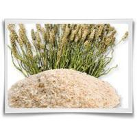 Buy cheap Psyllium Husks from wholesalers