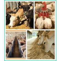 Quality Wholesale Organic Chicken Feed Supplier for Sale Healthy Safe Made in China ZWE-3 wholesale