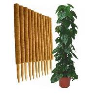 Quality Coconut Plant Flower Grow Support wholesale