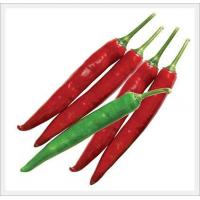China Agriculture Hot Pepper Seeds on sale