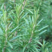 Buy cheap High Quality Rosemary Extract from wholesalers
