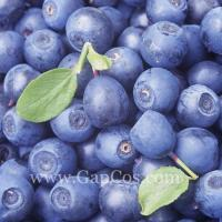 Quality Blue Berry Extract wholesale