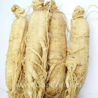 Quality Natural Panax Ginseng Root Extract wholesale