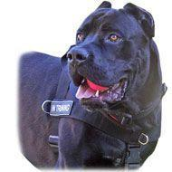 Quality SAR Lightweight Nylon Cane Corso Harness for Working Dogs wholesale