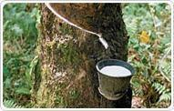 Quality Natural Rubber wholesale