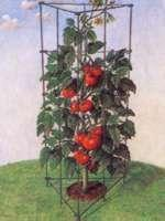Quality of Product:plastic coated tomato tower wholesale