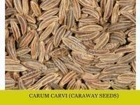 China CARUM CARVI ( Caraway seeds ) on sale