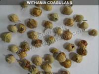 Buy cheap WITHANIA COAGULANS ( Paneer dodi ) from wholesalers